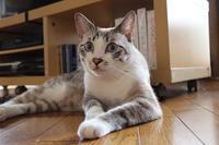 おネコ様の言葉 - ぎんネコ☆はうす
