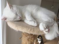 猫と天然酵母と梅干し。 - shimaai   藍染屋の独り言。