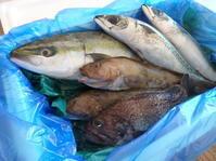 お魚が届きました❗ - henda  マイライフⅡ