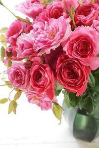 色とりどりの和ばら - お花に囲まれて