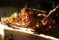 過行く日々 - hibariの巣