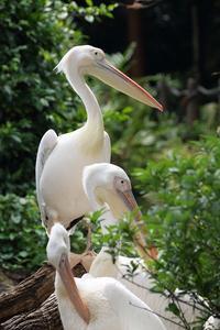 南国の鳥さんたち - miyabine's フォト日記2~身の周りのきれい・可愛い・面白い~