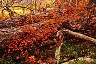 生命の秋色 - 風の香に誘われて 風景のふぉと缶