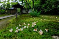 沙羅の花の頃(酬恩庵一休寺) - 花景色-K.W.C. PhotoBlog