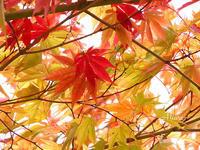 秋の散歩道寒露 - Miwaの優しく楽しく☆