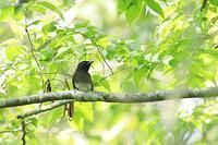 山麓の鳥たち・1♪ - happy-cafe*vol.2