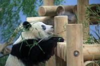 上野がすきシャンシャンその16 - 動物園のど!