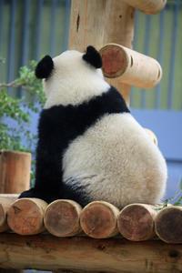 上野がすきシャンシャンその14 - 動物園のど!