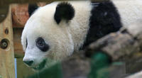 上野がすきシャンシャンその15 - 動物園のど!