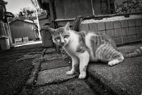 猫と路地 - 夢幻泡影