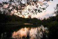 朝の色Ⅱ - 長い木の橋