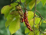 「青葉ヶ池」の木の実いろいろ - 花と葉っぱ