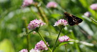 2018体育の日 - 紀州里山の蝶たち