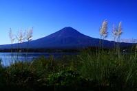 30年9月の富士(17)河口湖大石公園の富士 - 富士への散歩道 ~撮影記~