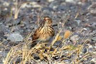 色艶に驚き - 綺麗な野鳥たち
