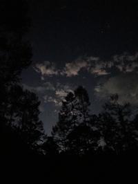 夜明け前 - 木洩れ日の森から
