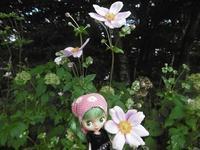 ~今日のお花~シュウメイギク~ - 雪うさぎのお裁縫箱