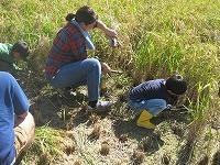 米づくり体験「稲刈り」 - げんきの郷 「体験農園」