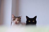 猫がまた太ってました; - きょうだい猫と仲良し暮らし