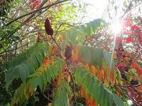 静かな秋の下のマレ散歩 - フランス Bons vivants des marais