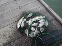 日本海秋釣り - Photo Break