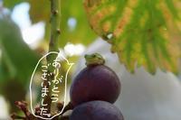 箱のご注文終了しました。 - ~葡萄と田舎時間~ 西田葡萄園のブログ