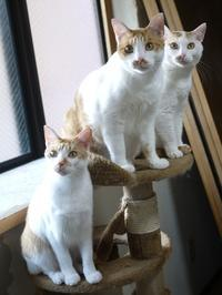 猫のお留守番 にゃーちゃんりゃんくんさんくん編。 - ゆきねこ猫家族