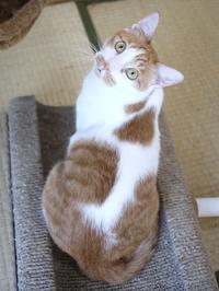 猫のお留守番 いーくん編。 - ゆきねこ猫家族