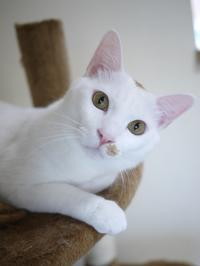 猫のお留守番 チロくん編。 - ゆきねこ猫家族