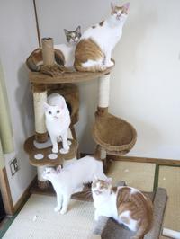 猫のお留守番 いーくんりゃんくんみーちゃんチロくんグレムリンちゃん編。 - ゆきねこ猫家族