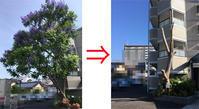 ジャンガラダの木が・・ - 松露園 blog