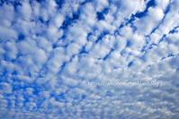 秋の雲 - ねこの目天気。