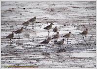 ダイゼンたちの干潟 - 野鳥の素顔 <野鳥と・・・他、日々の出来事>
