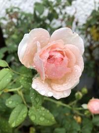 希望の花 - いつかの空