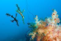 二匹風来 - Diving Life ~Aita pe'a pe'a~