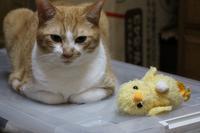 気になる視線 - ぎんネコ☆はうす