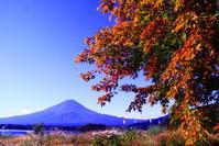 30年9月の富士(18)河口湖大石公園の富士 - 富士への散歩道 ~撮影記~