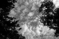 kaléidoscope dans mes yeux2018半径500メートルの情景#59 - Yoshi-A の写真の楽しみ