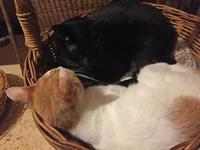 黒猫さんが好きその2 - りきの毎日