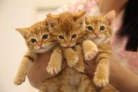 野良子猫ちゃん - 宮城県富谷市明石台  くさか動物病院ブログ