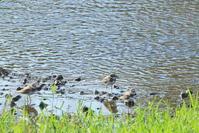 川沿いポタリング - TACOSの野鳥日記