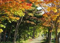 紅葉がスタート!軽井沢も秋の装いです。 - きれいの瞬間~写真で伝えるstory~