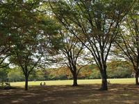 秋の代々木公園 - AREKORE