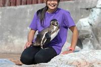 命名!ペンギンのヒナ、その名は「ビエネッタ」!!(東武動物公園) - 続々・動物園ありマス。