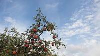 青い空と赤い林檎 - 福島県南会津での山暮らしと制作(陶芸、木工)