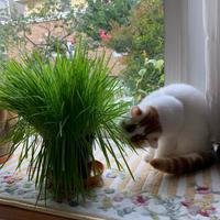 平和な朝 - 土筆の庭