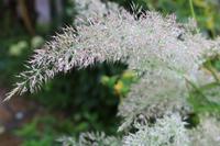 モフモフ - CHIROのお庭しごと