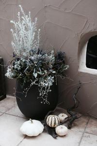 ダークなハロウィンの寄せ植え - CHIROのお庭しごと