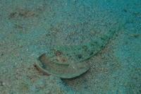 18.10.10ワレワレはアキラメない! - 沖縄本島 島んちゅガイドの『ダイビング日誌』