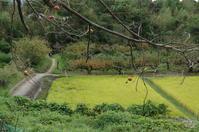 天理市山之辺の道と柿 - ぶらり記録:2 奈良・大阪・・・